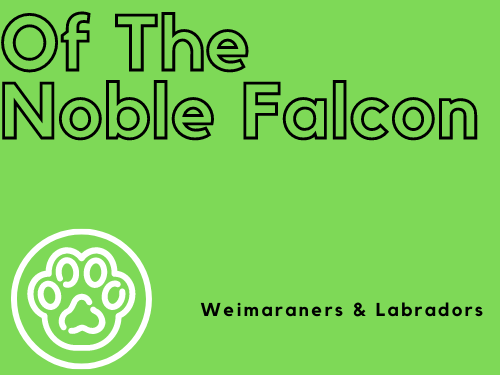 Of The Noble Falcon